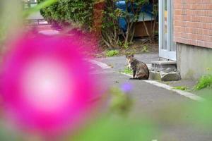 110807-Hakodate_Cat-b2.jpg