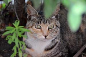 110807-Hakodate_Cat-b5.jpg