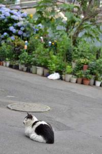110807-Hakodate_Cat-c1.jpg