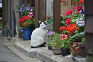 110807-Hakodate_Cat-d4.jpg