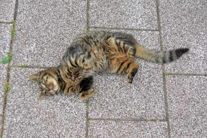 110807-Hakodate_Cat-e3.jpg
