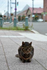 110807-Hakodate_Cat-e5.jpg