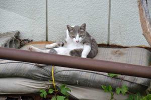 110808-Hakodate_Cat-a1.jpg