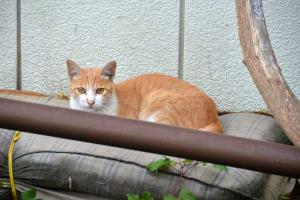 110808-Hakodate_Cat-a2.jpg
