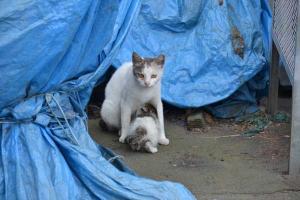 110808-Hakodate_Cat-c3.jpg