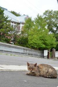 110808-Hakodate_Cat-e2.jpg