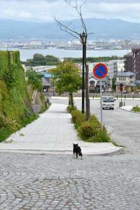 110808-Hakodate_Cat-f1.jpg