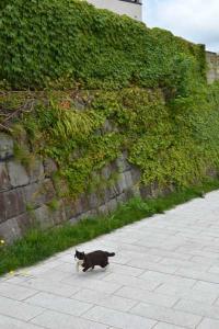 110808-Hakodate_Cat-f3.jpg