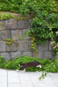 110808-Hakodate_Cat-f4.jpg