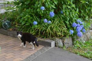110808-Hakodate_Cat-f6.jpg
