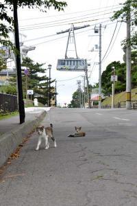 110808-Hakodate_Cat-g1.jpg