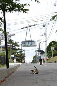 110808-Hakodate_Cat-g2.jpg
