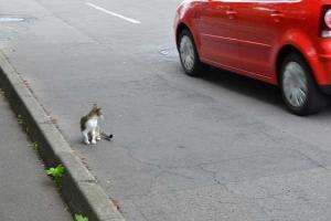 110808-Hakodate_Cat-g4.jpg
