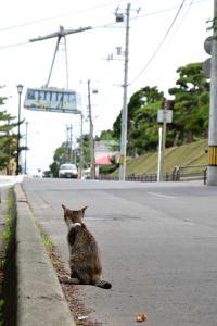 110808-Hakodate_Cat-g5.jpg