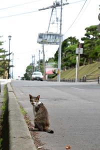 110808-Hakodate_Cat-g6.jpg