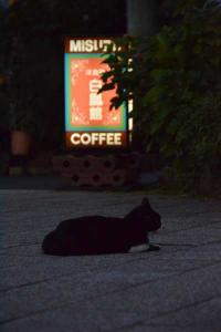 110809-Hakodate_Cat-a1.jpg