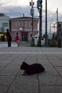 110809-Hakodate_Cat-a2.jpg