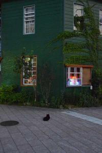 110809-Hakodate_Cat-a3.jpg