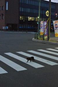110809-Hakodate_Cat-a4.jpg