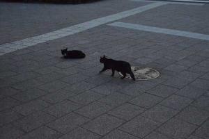 110809-Hakodate_Cat-a5.jpg