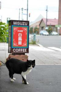 110809-Hakodate_Cat-b1.jpg