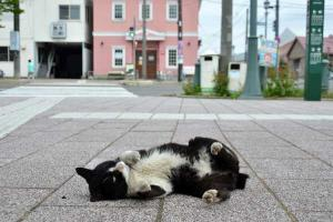 110809-Hakodate_Cat-b4.jpg