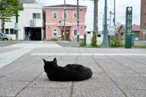 110809-Hakodate_Cat-b5.jpg
