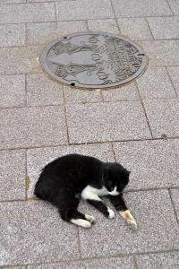 110809-Hakodate_Cat-b7.jpg