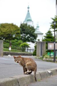 110809-Hakodate_Cat-e1.jpg