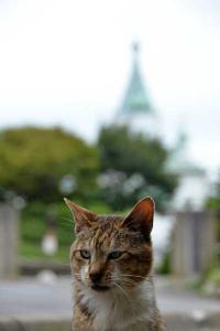 110809-Hakodate_Cat-e2.jpg