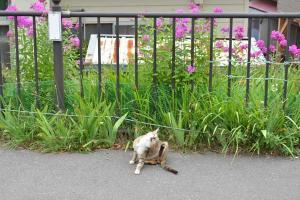 110809-Hakodate_Cat-e3.jpg