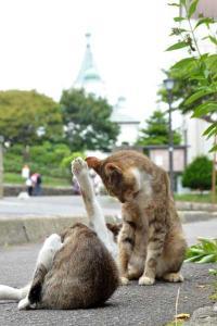 110809-Hakodate_Cat-e5.jpg