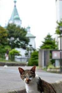 110809-Hakodate_Cat-e6.jpg