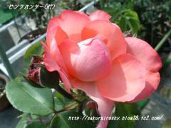KIF_3274-2.jpg