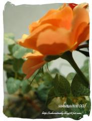 KIF_3603-1.jpg