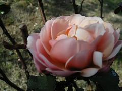 KIF_3888-1.jpg