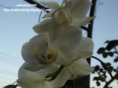 KIF_3966-1.jpg
