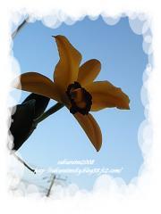 KIF_3976-1.jpg