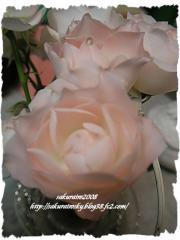 KIF_3987-1.jpg