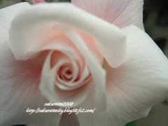 KIF_4422-1.jpg