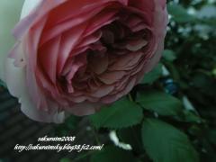 KIF_4636-1.jpg