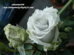 KIF_4731-1.jpg