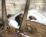 野生の猿発見