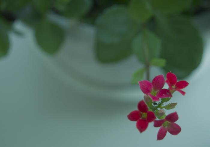 蟻と赤い花