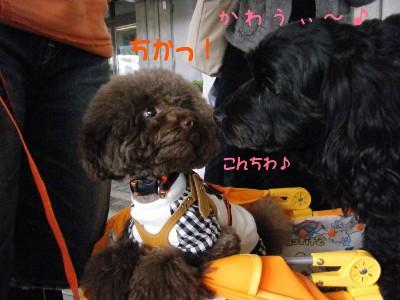 saku&tema 18302561