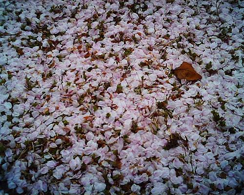 花びらも美しい