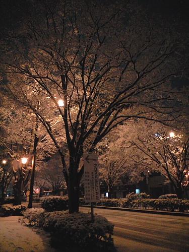 夜桜みたいにキレイだった
