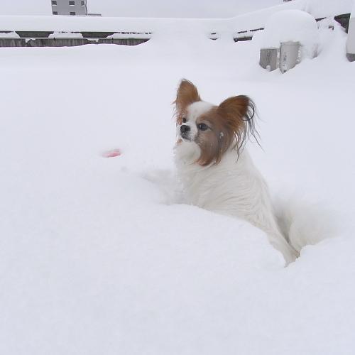 雪に埋もれたサリー一歩も動けず・・・