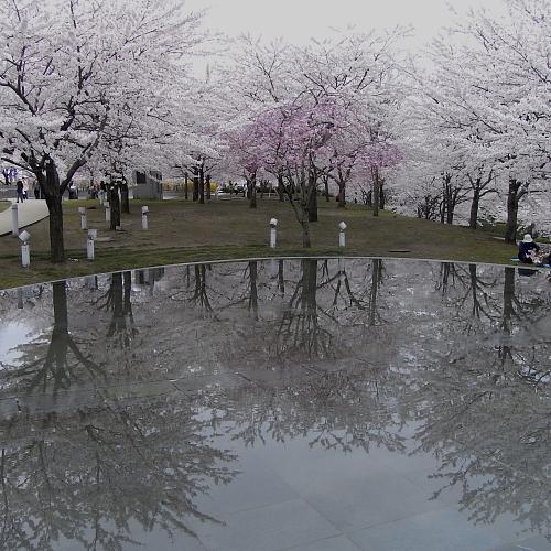 毎年恒例、空中庭園も満開