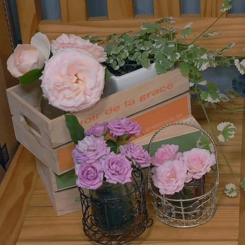 ベランダで咲いた花たち♪